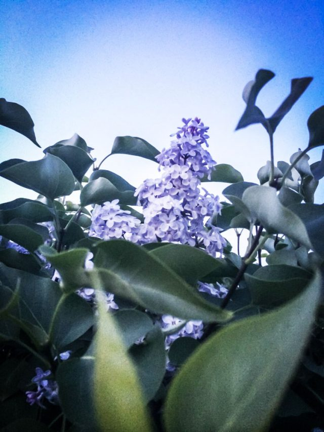 SVK.photo – портфолио – природа – фото 6
